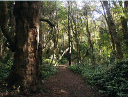 There are bush walks everywhere in the Kaka Point area and the wider Catlins region. All are full of native birds.
